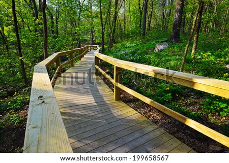 Walkway through the woods - stock photo