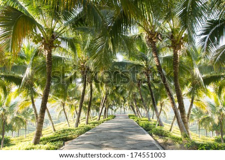 Walkway with coconut tree in the garden   - stock photo