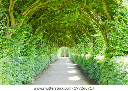 Walkway with green trees - stock photo