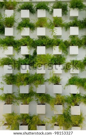Wall grass Nursery - stock photo