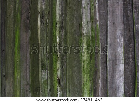 wall made of old rotten wooden planks with green moss, old barn, texture - stock photo