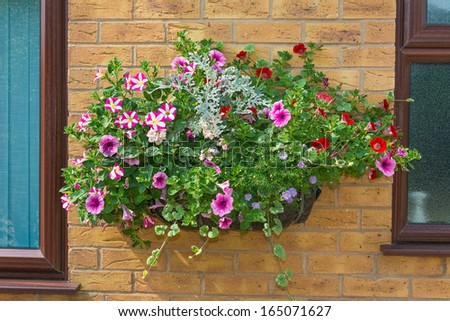 Wall mounted hanging baskets with a range of summer flowers - stock photo