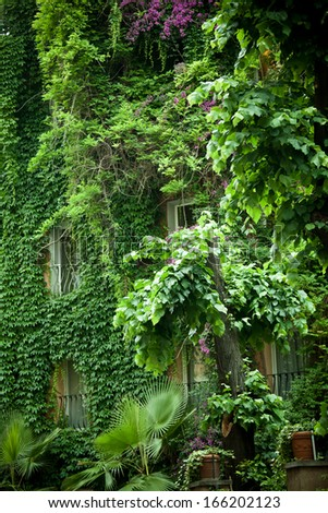 Wall of a house completely overgrown with Common Ivy - stock photo