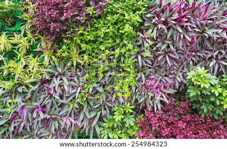 wall of garden plants - stock photo