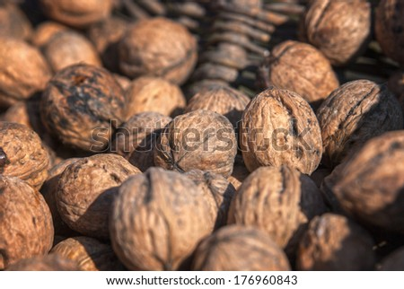 walnut - stock photo