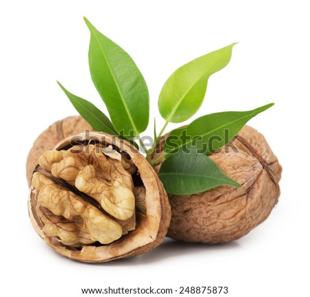 Walnut closeup isolated on white background - stock photo