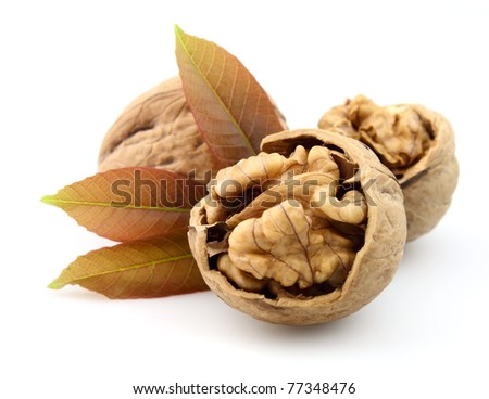 walnut t with leaf isolated on white background - stock photo