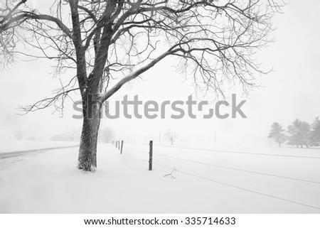 Walnut Tree and Fence During Snow Storm - stock photo