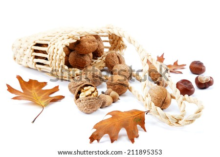 Walnuts in a basket and oak leaves with acorns isolated on a white background. - stock photo