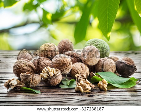 Walnuts on the wooden table under the walnut-tree. - stock photo