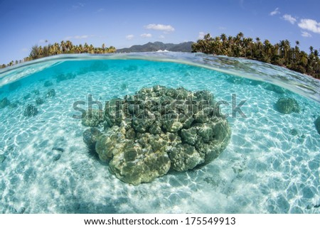 Warm, clear lagoon water bathes a shallow coral bommie that grows near the French Polynesian island of Raiatea. This part of the South Pacific contains many idyllic islands and beautiful reefs. - stock photo