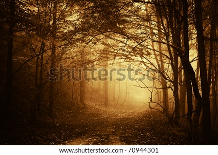 warm light falling on a road in a dark forest in autumn - stock photo