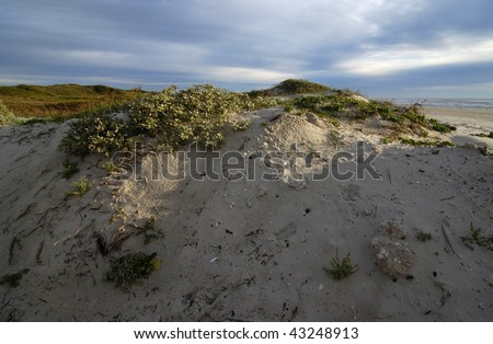 Warm morning light on grassland and dunes of Padre Island National Seashore with ocean waves on horizon. - stock photo
