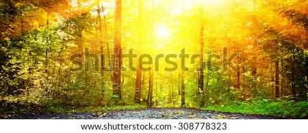 Warm sun in forest - Swabian Alps, germany - stock photo