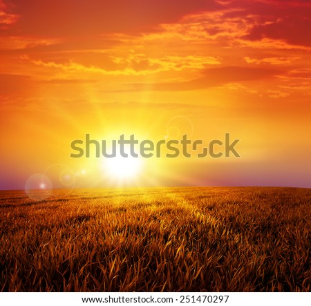 Warm sunset on the wild meadow. Intense sun setting down on a peaceful grass field - stock photo
