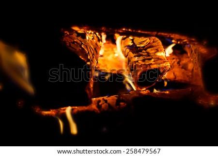Warm woods - stock photo