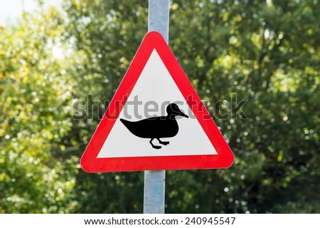 Warning Duck Road Sign - stock photo