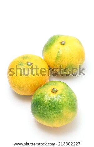 Wase milan, satsuma mandarin on white background  - stock photo