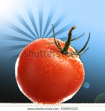 WASHED FRESH CHERRY TOMATO CLOSEUP , ISOLATED ON GRADIENT WITH SHAPE BACKGROUND - stock photo