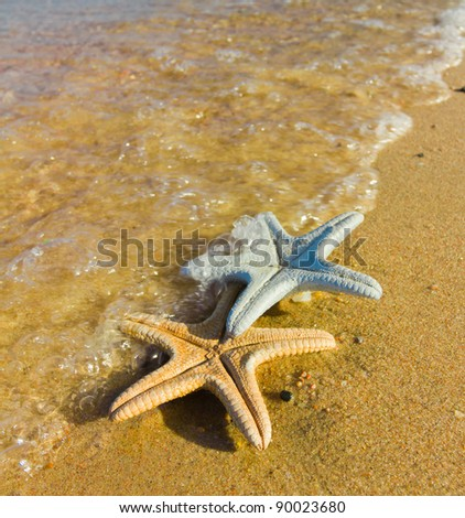 Washed out of from the Sea - stock photo