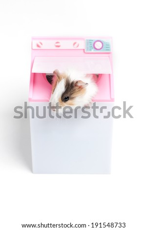 Washer. Funny hamster sitting in washing machine - stock photo