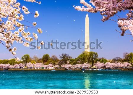Washington, D.C. Washington Monument during spring. - stock photo