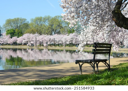Washington DC - Cherry Blossom Festival at Tidal Basin in spring   - stock photo