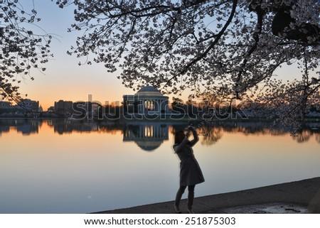 Washington DC - Thomas Jefferson Memorial during Cherry Blossom Festival at Tidal Basin.  - stock photo