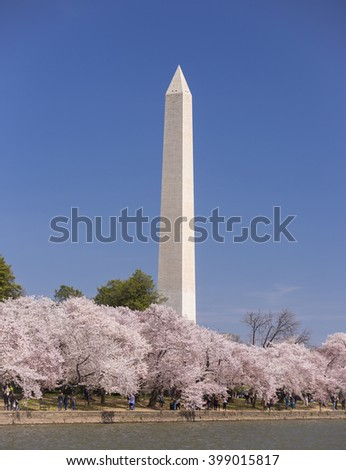 WASHINGTON, DC, USA - MARCH 30, 2016: Cherry trees blossoms at Tidal Basin and Washington Monument. - stock photo
