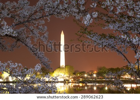 Washington monument during cherry blossom, DC - stock photo