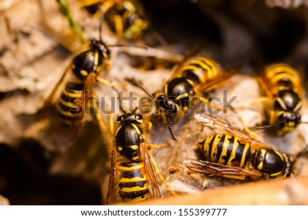 Wasp in the nest - stock photo