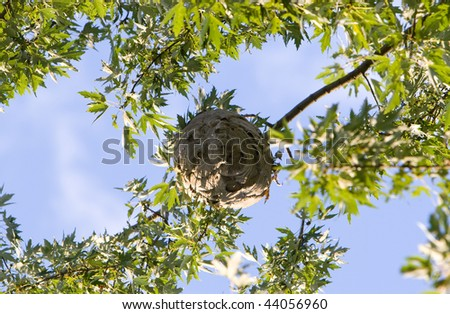 wasp nest in tree - stock photo