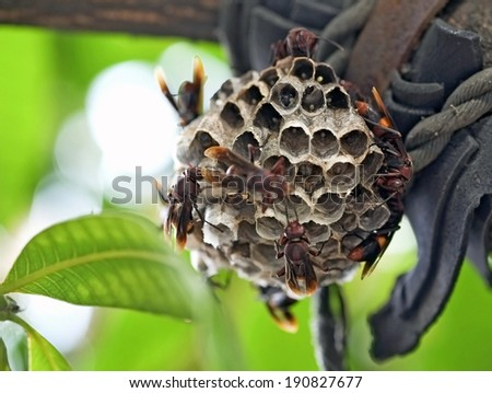 Wasp nest on the tree. - stock photo