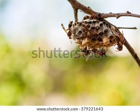 Wasp nest on tree - stock photo