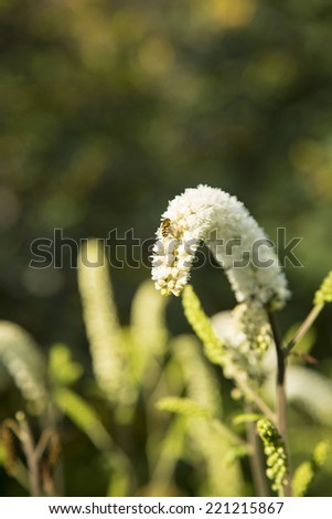 Wasp on a white flower - stock photo