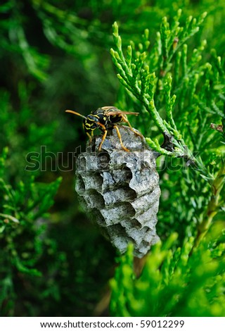 wasp protects its nest on green background - stock photo
