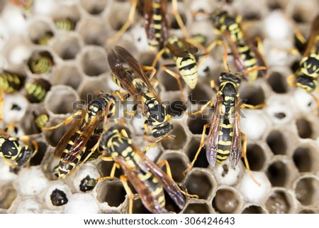 wasps. close - stock photo