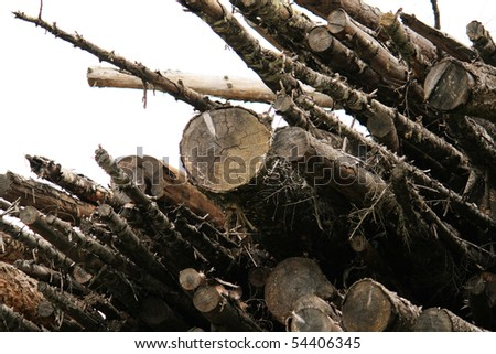Wasted Cut Logs - stock photo