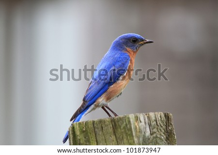 Watching over the baby birds - stock photo