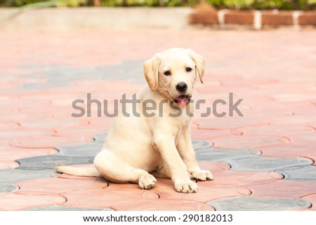 Watching Puppy - stock photo