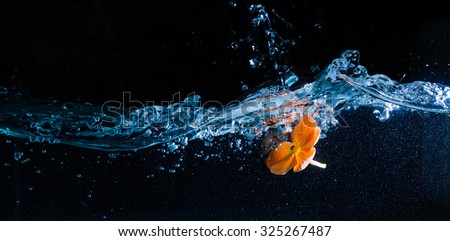Water and orange flower over black background - stock photo