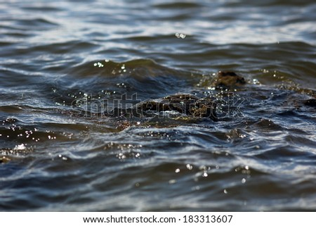 water and rock - stock photo
