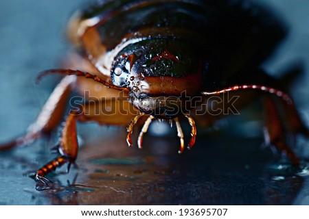 water beetle macro - stock photo