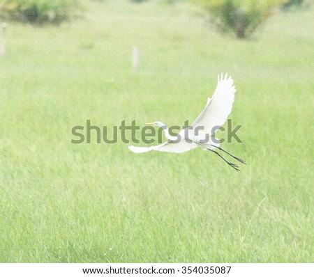 water bird on canvas.  - stock photo