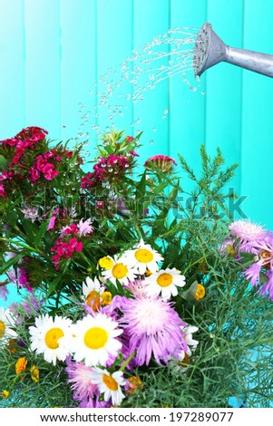 Water can watering flowers on wooden background - stock photo