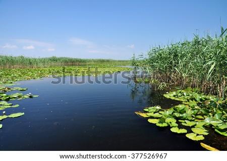 Water channel, river in Danube delta, Romania - stock photo
