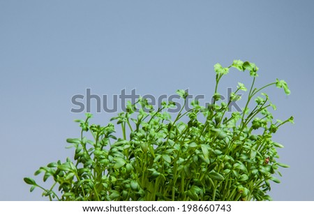 Water cress growing very quickly - stock photo