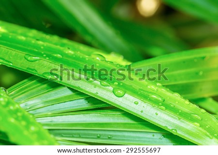 water drop green leaf - stock photo