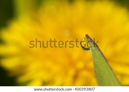 water drop on a blade of grass against the dandelion and reflection in it - selective focus, copy space - stock photo