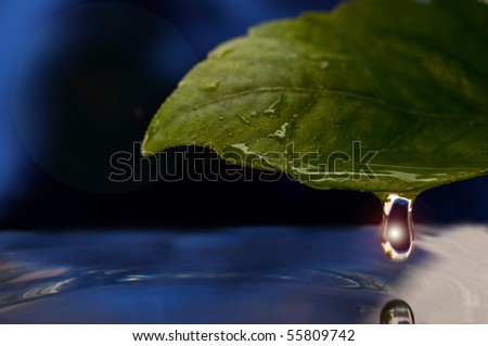 water drop on a flower leaf - stock photo